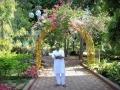 SOAW- plant arch